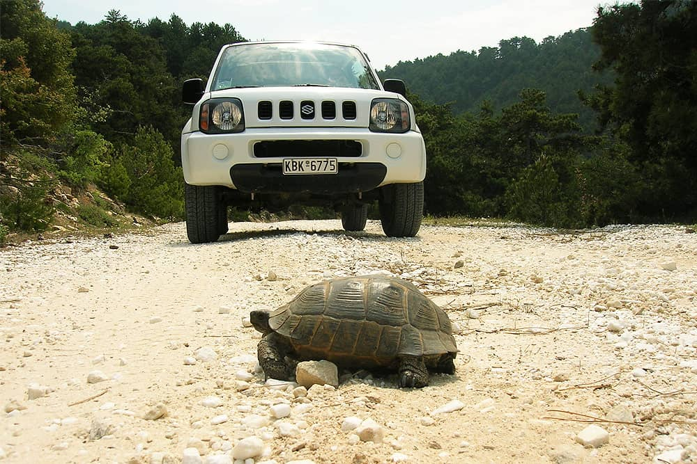 best places in thassos - turtle and Suzuki Jimnny Ypsarion Mountain