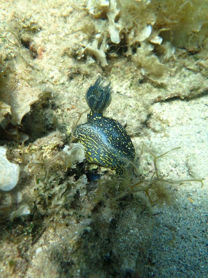 black fish underwater