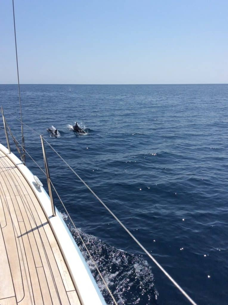 dolphins at aeolus yacht thassos